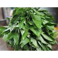 EFO TETE (African Spinach)