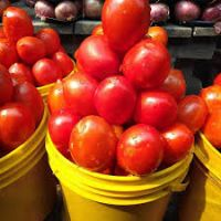 Fresh Tomatoes (paint Rubber0