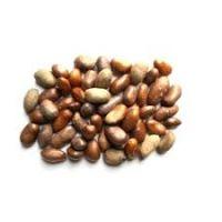 CALABASH NUTMEG  (Ehuru Seeds)